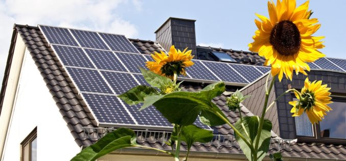 Solar Cells on Roof With Foreground Sun Flowers