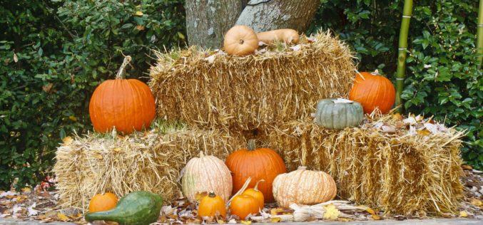 Fall Display of Pumpkins on Bales of Hay