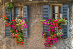 Exterior Window Shutters for Decor
