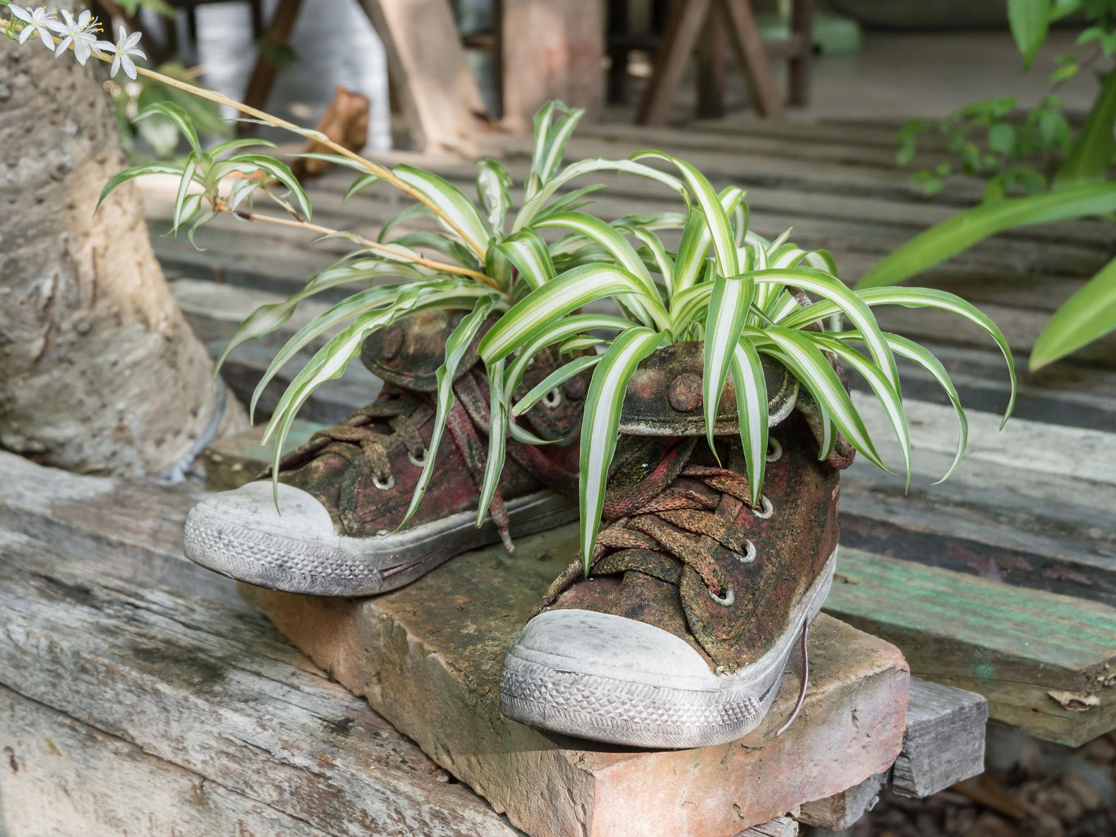 shoe garden container