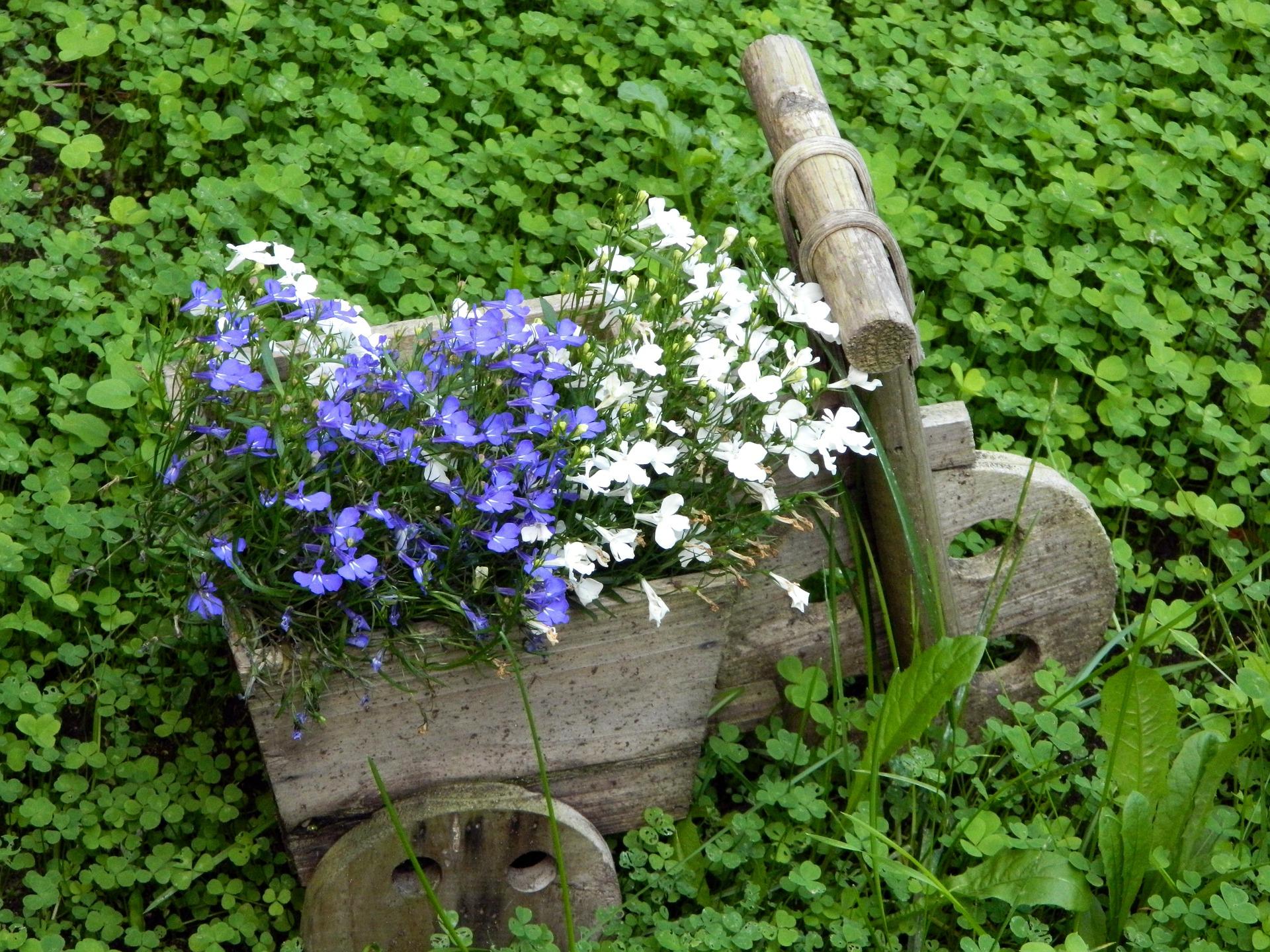 unique flower containers