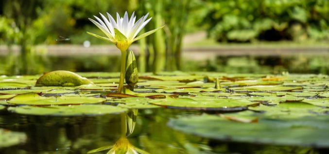 Adding a Garden Pond to Your Landscaping – Some Ideas