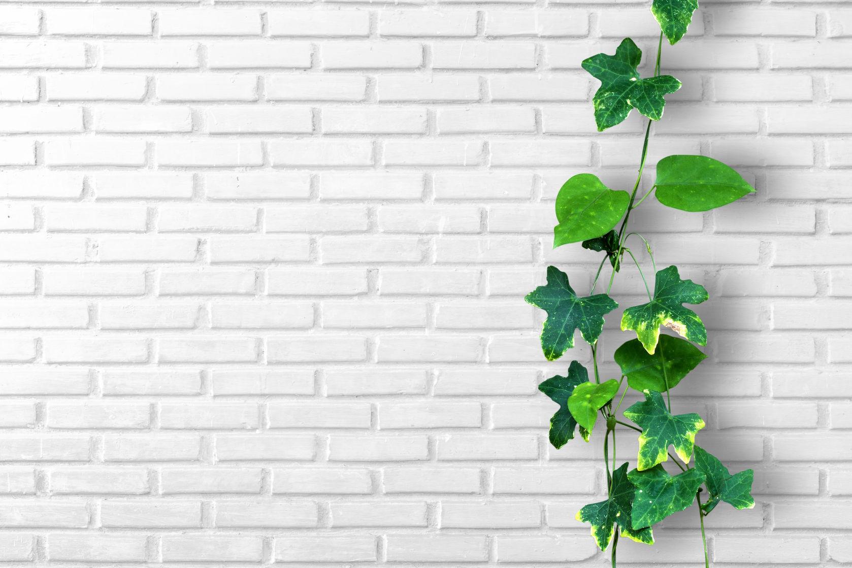 plant garden wall decor