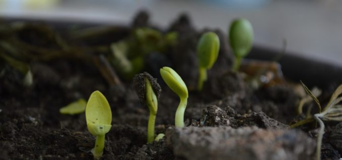 Living Green By Building and Utilizing a Garden Compost