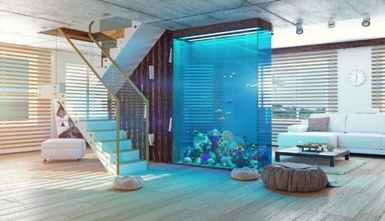 <span>photo image analysis:</span> If You Must Have an Nice Aquarium – Make It Big