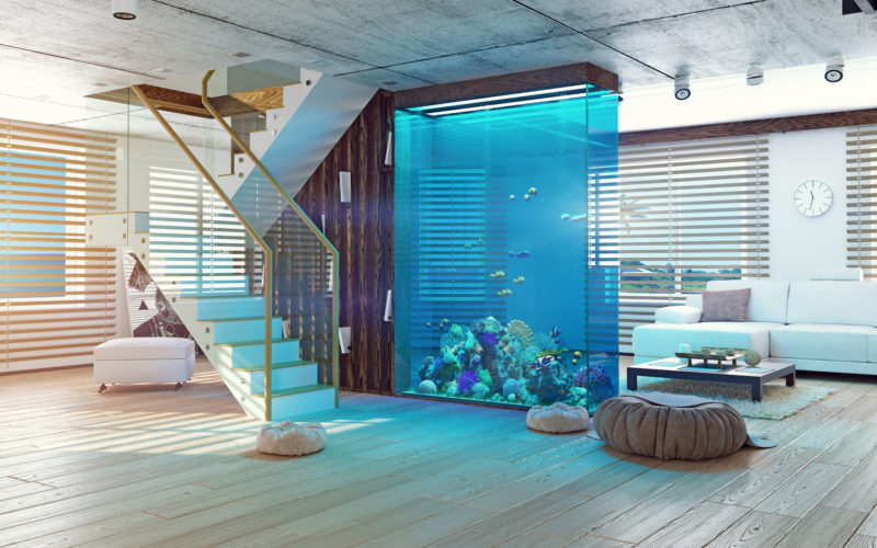 <span>photo image analysis:</span> If You Must Have an Nice Aquarium – Make It Big
