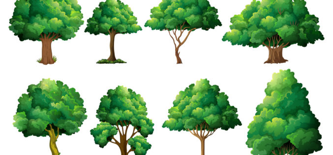 Understanding the Kinds of Shade Trees