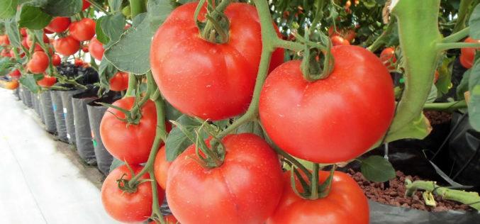 "Hydroponic Gardening – A Good ""Going Green"" Idea"