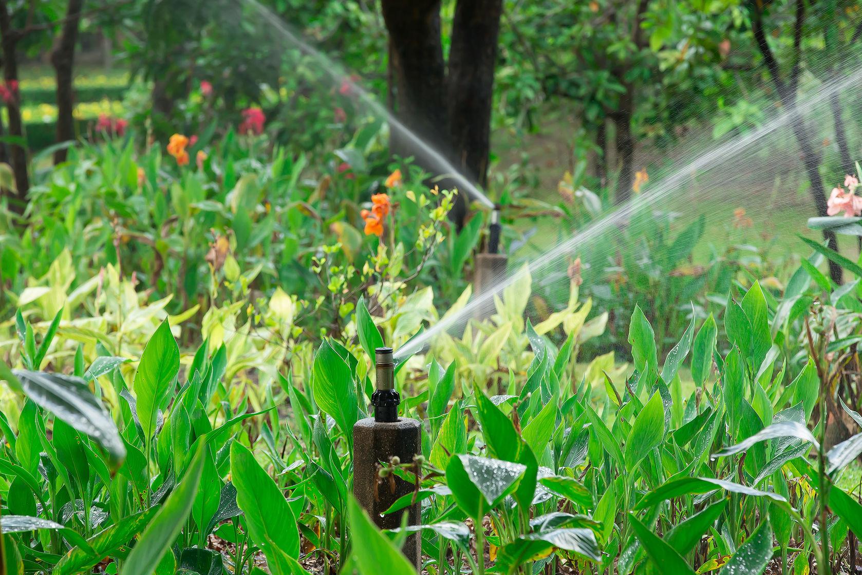 water sprinkler system