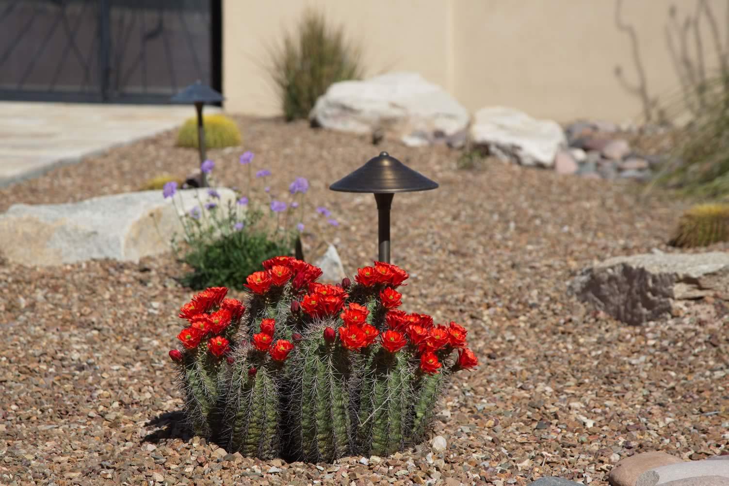arid gardening