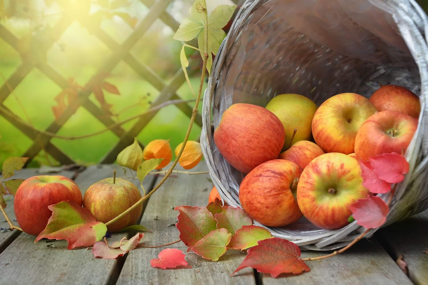 apple autumn decor