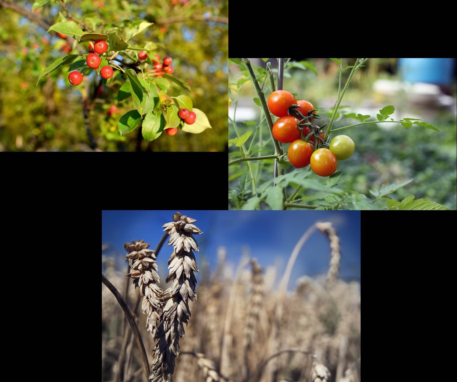 august harvest