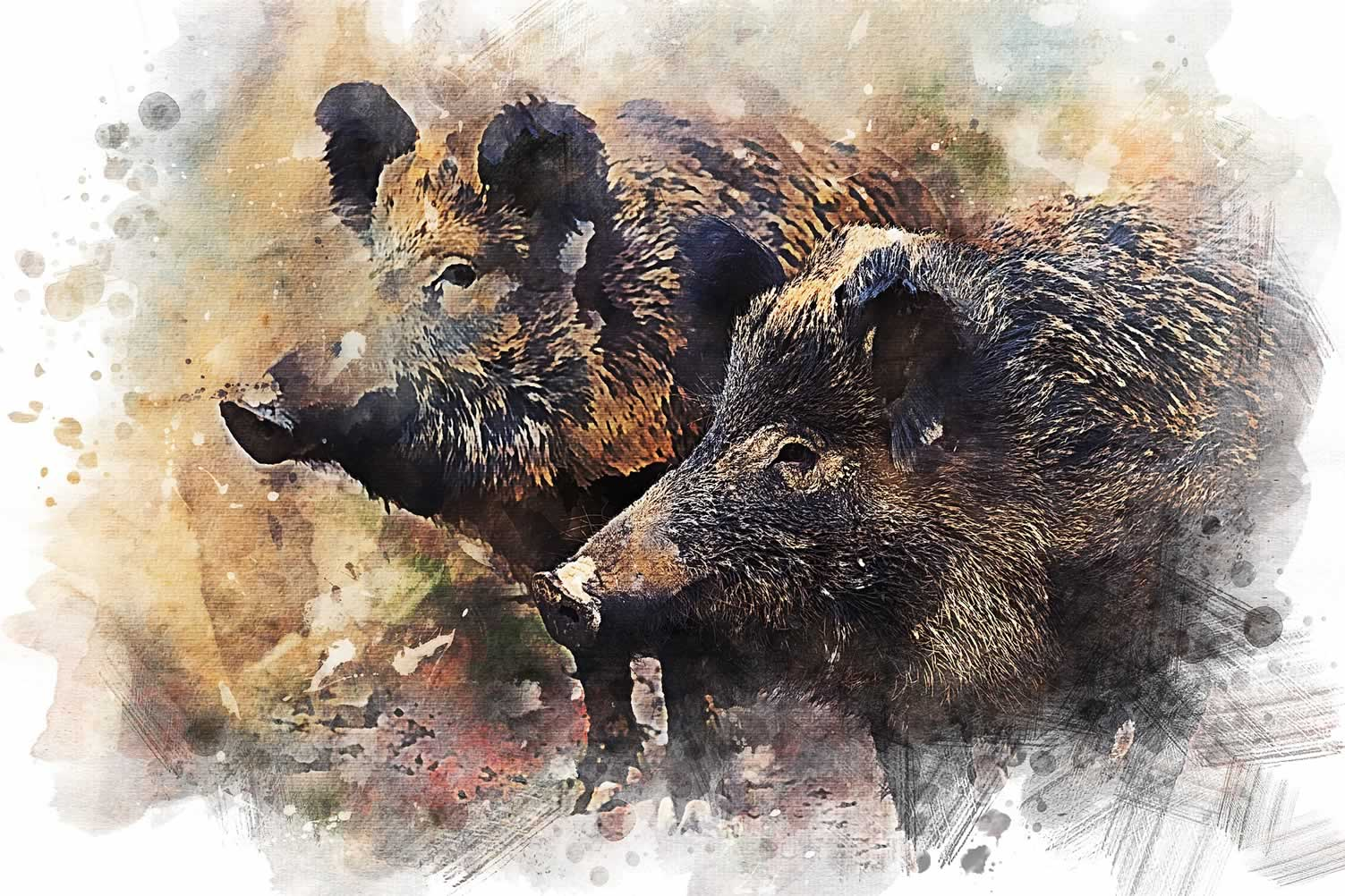 brown boars