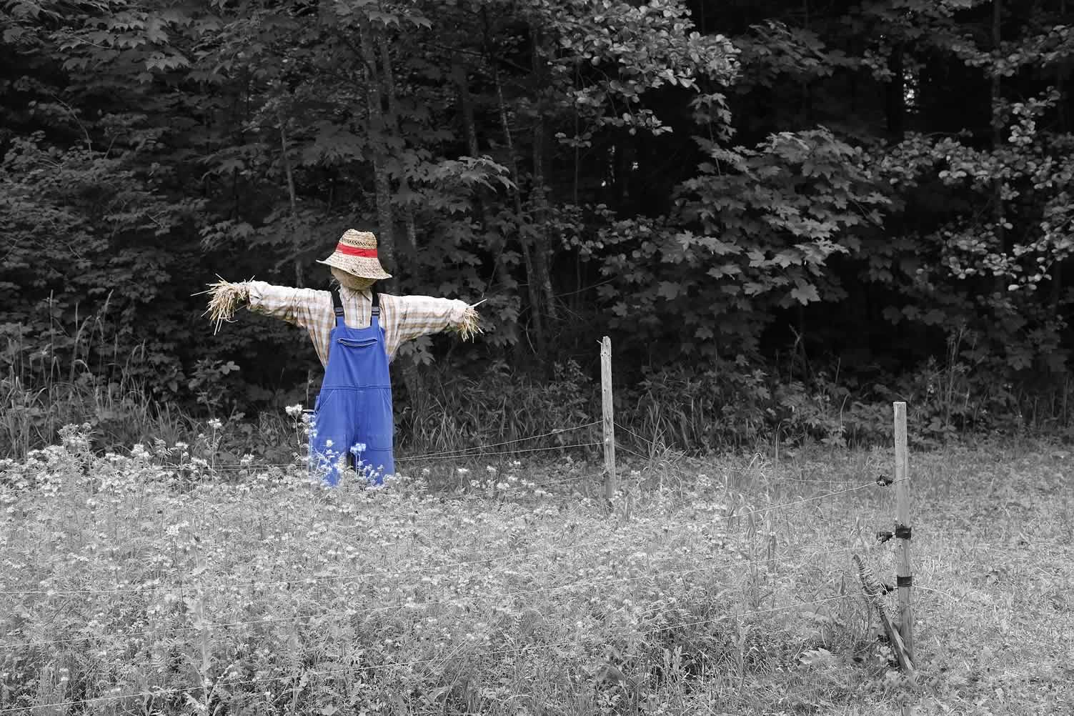 scarecrow to come down