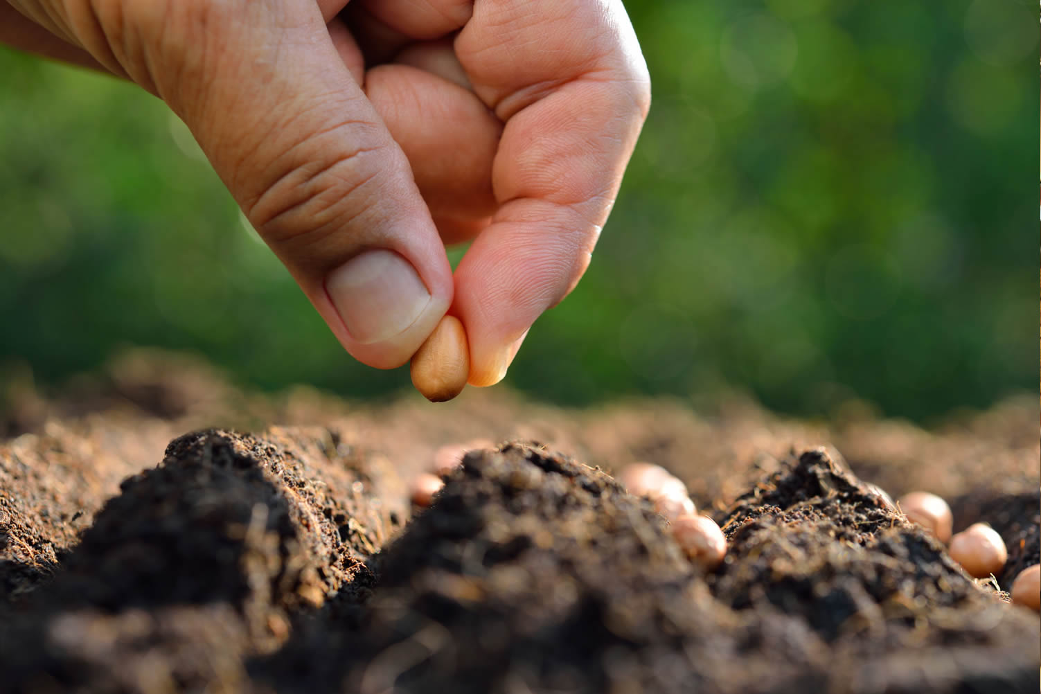 garden seeding