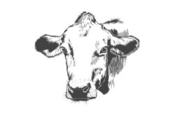 Understanding Beef – Stuff to Know About Selection and Cooking
