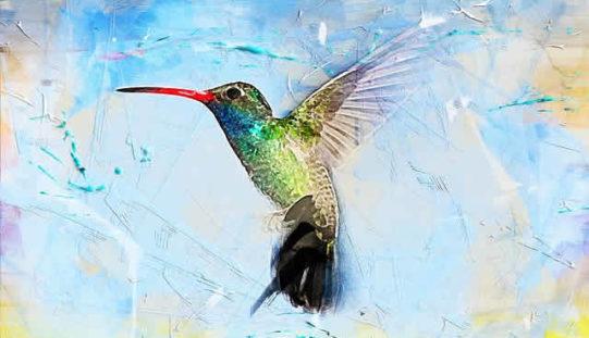 Building a Bird Paradise In Your Backyard