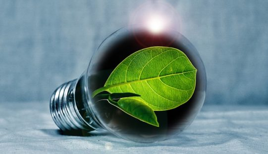 Comparing Energy Efficient Light Bulbs