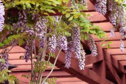 Patio Redwood Pergola for Outdoor Living