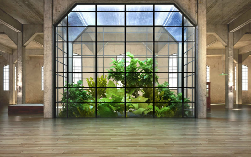 5 Indoor Gardening Tips When Living in a Crowded City