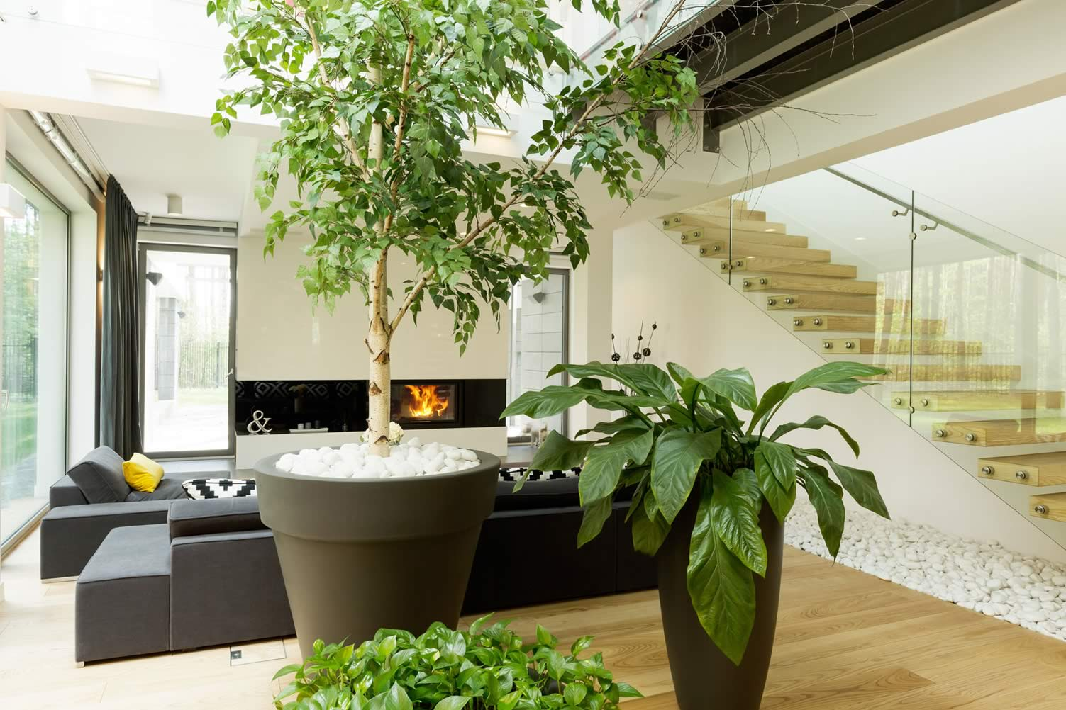 indoor house trees