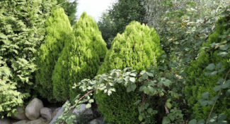 Needing Shrubs for Your Home and Yard Landscaping