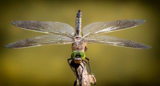 Creative Floor Designs for Entomologists
