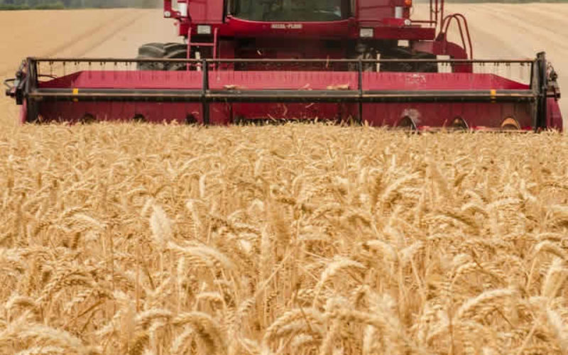 Time for the Harvest – Gathering It In for Production