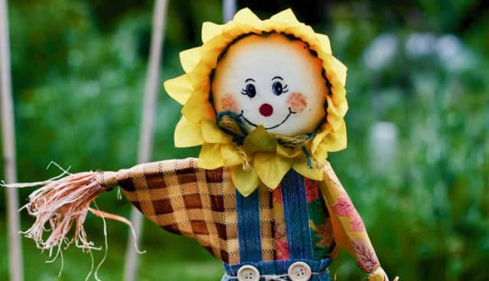 Time for the Scarecrow to Go Up – Just Before Harvest