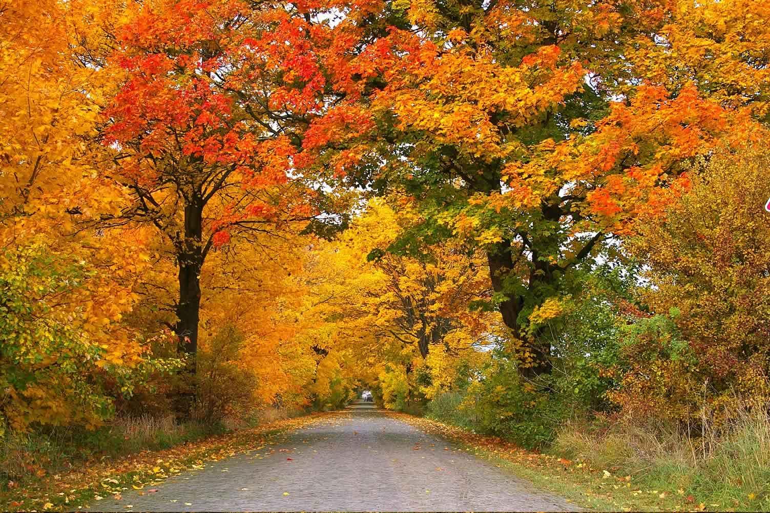 fall season begins