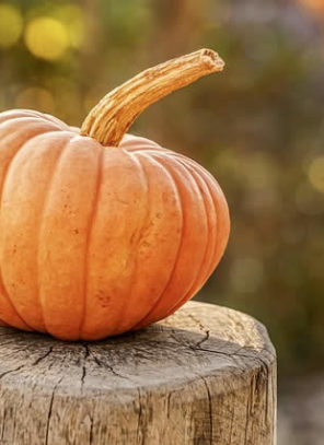 Where Did Pumpkins Come From (Just In Time for Halloween)
