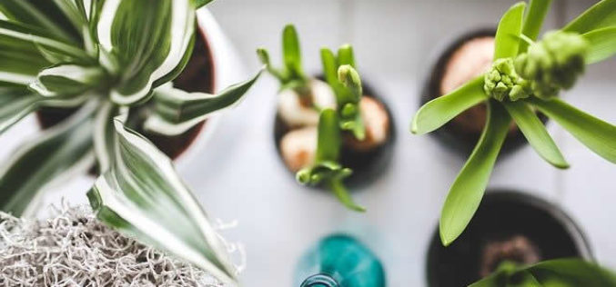 The Best Indoor Plants For Creating Good Feng Shui