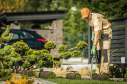 6 Landscaping Services to Leave to a Professional