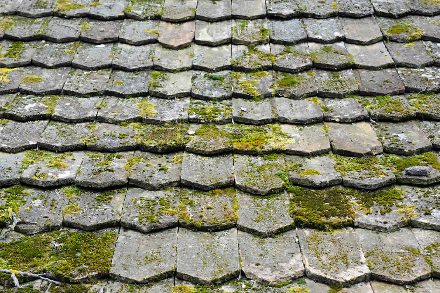 how trees can ruin roof