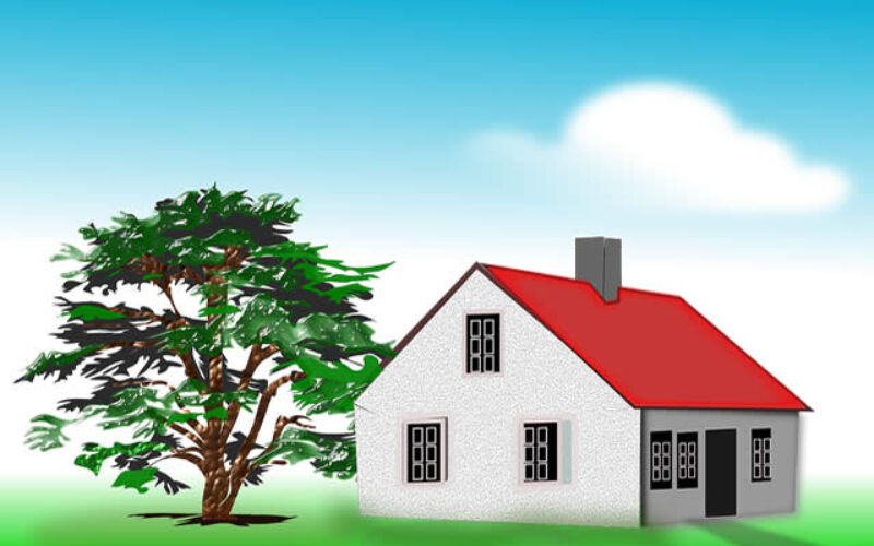 How Trees Can Ruin Your Roof