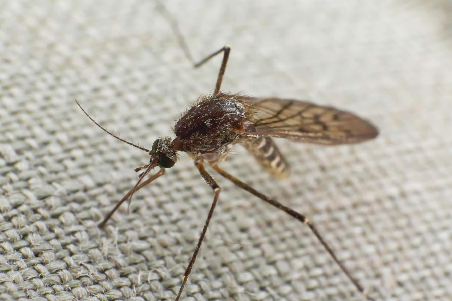 backyard mosquito