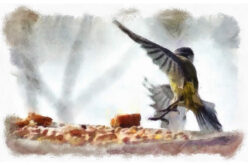 Hey Birdie, Birdie – Welcome To My Backyard